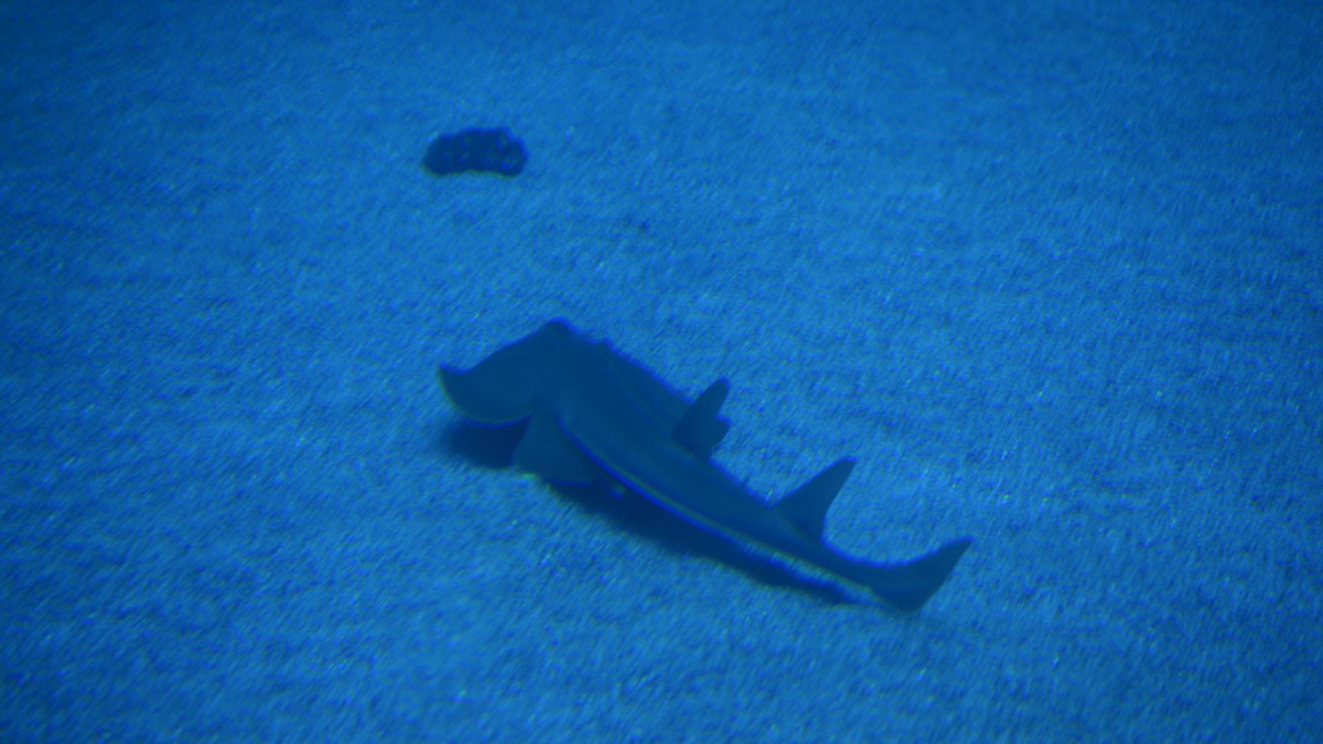 Tiburón Guitarra