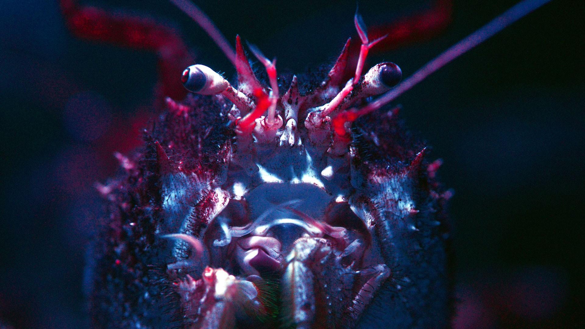 Cangrejo Gigante de Profundidad