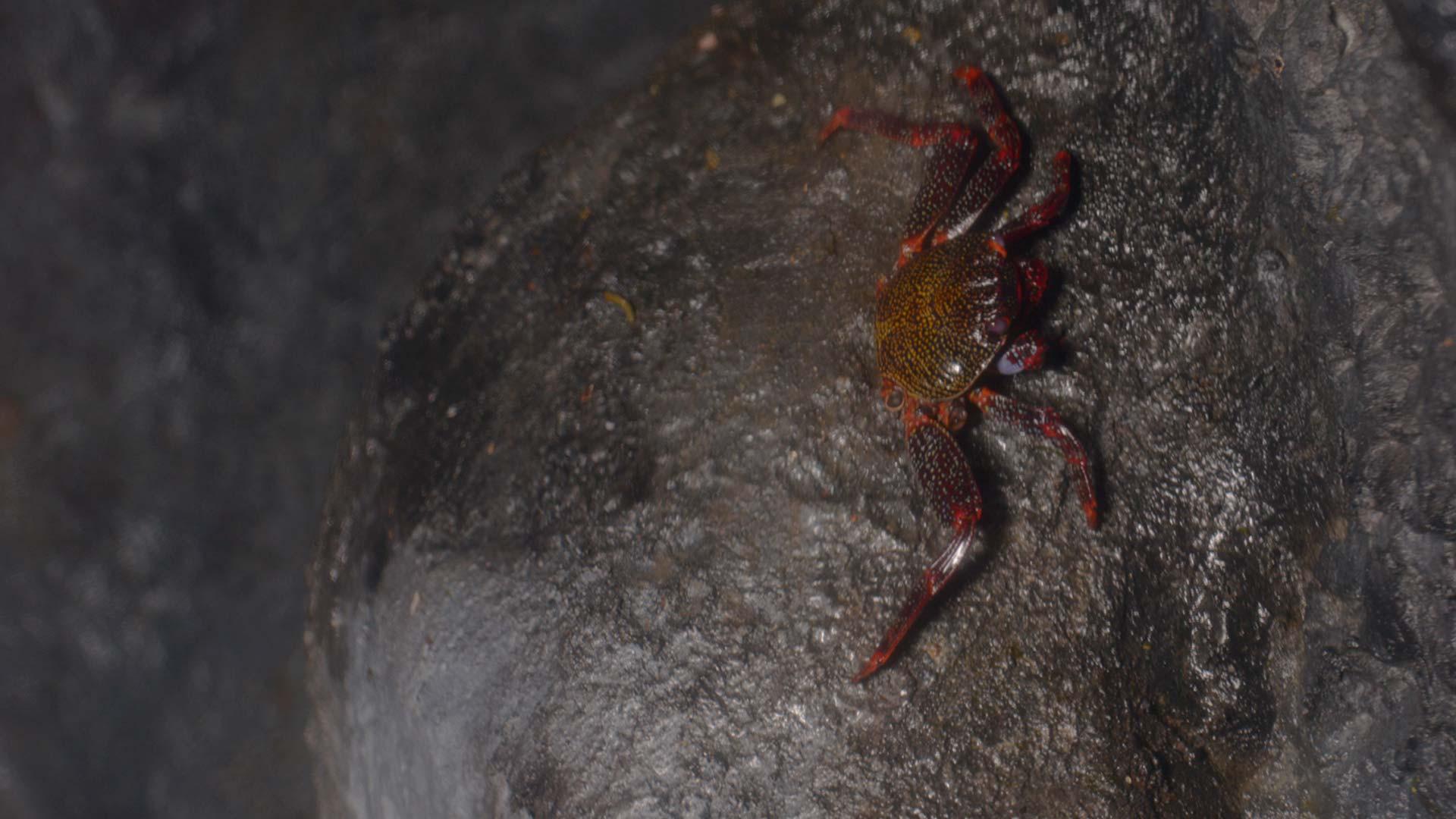 Florida stone crabs
